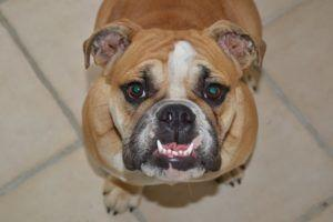 5 Tips For Dogs Who Hate Dental Care
