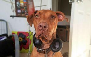 Does Your Dog Actually Enjoy Listening To Music? The Answer May Surprise You