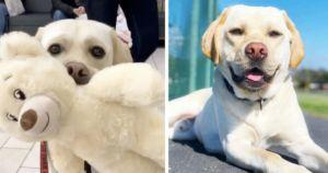 Service Dog Chooses His Own Special Build-A-Bear