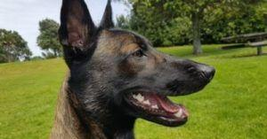 U.S. Bomb Sniffing Dogs Sent To Jordan Are Dying Of Neglect