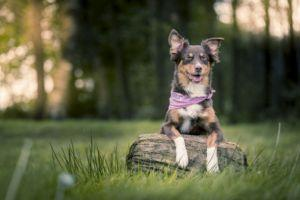 What Is A Holistic Vet And Should You Schedule An Appointment?