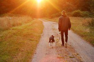 New Study Shows Many Dog Owners Prefer Time With Pets Over Their Friends