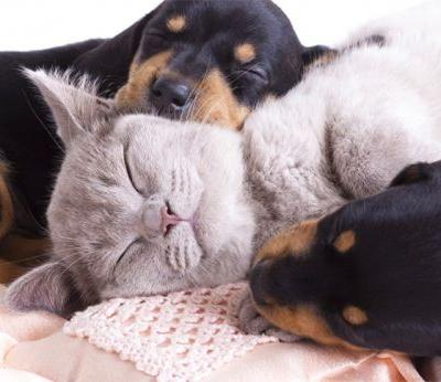 Must do routines for Puppies and Kittens before you leave to work