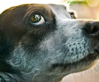 My Dog Stares at Me - Is That Normal?