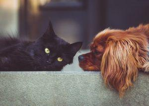 House Passes Official Dog & Cat Meat Trade Prohibition Act