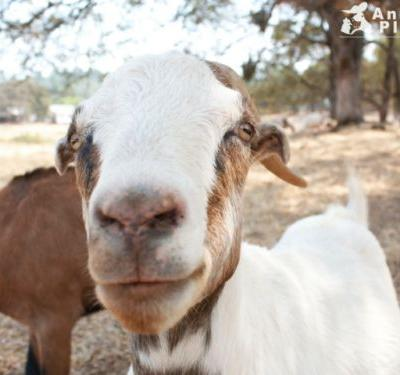Born at our sanctuary, Noah has only ever known compassion
