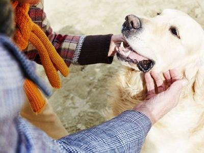 Top 7 Most Emotional Dog Breeds With Most Sensitive Souls