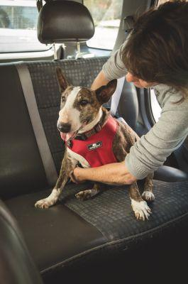 How to Keep Your Dog Safe and Comfortable in the Car