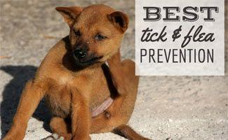 Best Flea and Tick Prevention for Dogs: Need a Strong Defense?