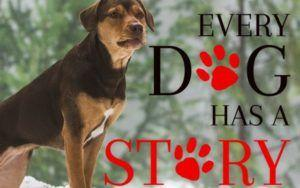 """Canine Star Of """"A Dog's Way Home"""" Was Hand-Picked From A Tennessee Shelter"""