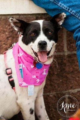 Special Dog Seeks Special Home: Jackie the Cattle Dog Mix