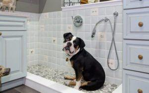 Dog Showers: The Latest Home Trend Every Pup Parent Needs