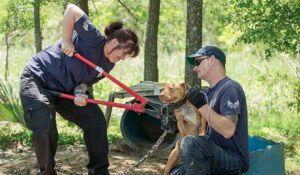 That Moment When a Dog Is Rescued from Their Abuser