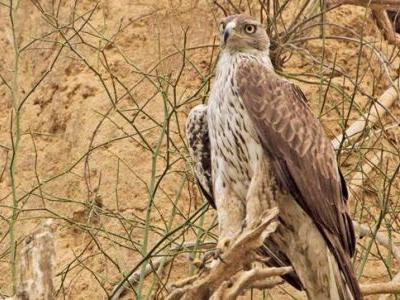 National Chambal Sanctuary is teeming with rare and exotic species of water birds & animals