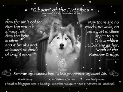 A Letter to Gibson on His 2nd Anniversary at The Rainbow Bridge LiveGibStrongForever