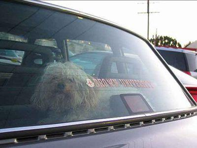 Man Charged With Cruelty To Animals For Leaving His Dog In A Hot Car