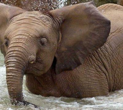 Young elephant dies after brief illness at Indiana zoo