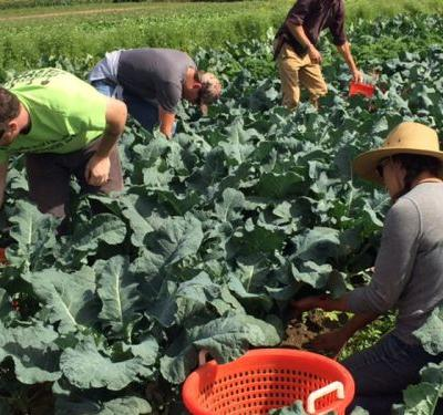 5 Programs Helping Soldiers Become Farmers