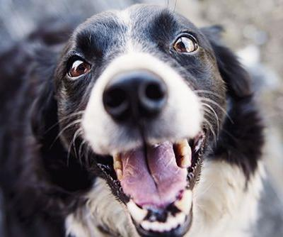 Symptoms to Watch for in Your Dog: Teeth Chattering