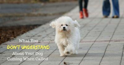 What You Don't Understand About Your Dog Coming When Called