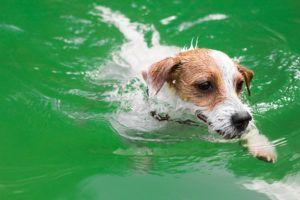 What is Dry Drowning-and Is Your Dog at Risk?