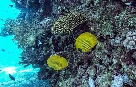 Egyptian tourism revival threatens Red Sea ecosystem