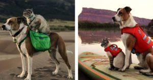 A Rescue Dog And Cat Go On The Most Incredible Adventures Together
