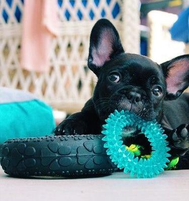 13 Pictures Of French Bulldogs That Show They're The Cutest Animals Ever