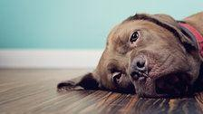 Pets Can Experience Grief. Here's What You Should Know About It