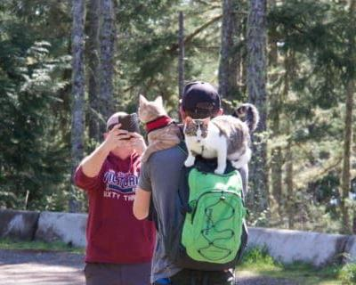 How to Manage Greetings When Hiking with Cats