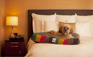 Orlando Hotel Welcomes 900 Family Dogs Displaced By Hurricane Irma