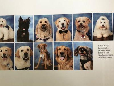 The therapy dogs who helped survivors of the Parkland shooting got their own page in the school's yearbook