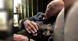 UPDATE: Lovable Lenny Recently Adopted By Patrick Stewart and Sunny Ozell Has Crossed the Rainbow Bridge