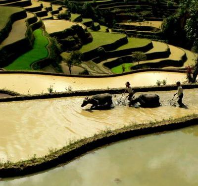 Agricultural Heritage Sites Fuse Ancient Wisdom with Modern Adaptation