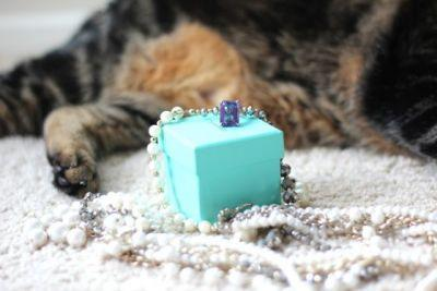 Sundays With Tabs the Cat, Makeup and Beauty Blog Mascot, Vol. 433