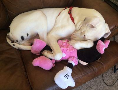 10 Reasons Life Will Never Be The Same Once You Own A Great Dane