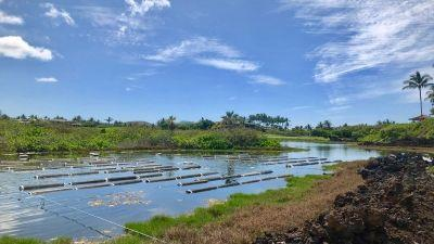 Four Seasons Resort Hualalai Introduces Exclusive Pond-To-Table Hualalai Seafood Experience