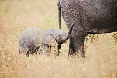 Love Animals? Here's How To Visit Them In the Wild Responsibly