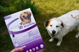 Protecting Your Dogs from Fleas and Ticks Vectra3DDog