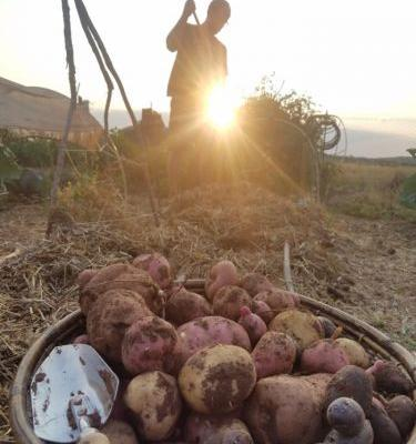 How the Navajo Nation Is Reclaiming Food Sovereignty