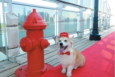 Vacation on a Dog-Friendly Cruise This Summer