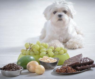 Can Dogs Eat Grapes? What to Know About Grapes and Dogs