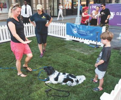 Everything You Need to Know About the AKC's Canine Good Citizen Program