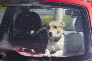 Seattle Animal Shelter reminds pet owners of hot car dangers
