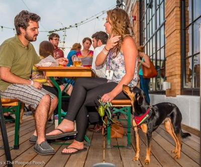 10 Colorado Breweries that Welcome Your Dog
