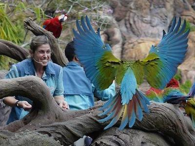 'Magic of Disney's Animal Kingdom' is Just the Latest Disney TV Special to Highlight the Theme Parks - Watch the Best and Weirdest Here