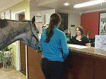 Lindsey Partridge checks her horse into a hotel for $10