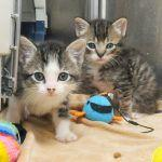 Survey of Massachusetts Animal Shelter Record-Keeping Practices in 2015