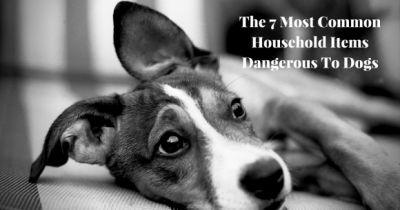 The 7 Most Common Household Items Dangerous To Dogs