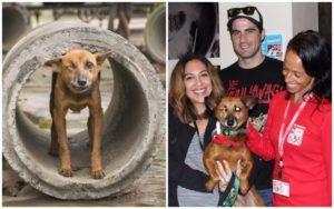 Dog Rescued From Meat Farm Loves Being Part Of Her New Forever Family